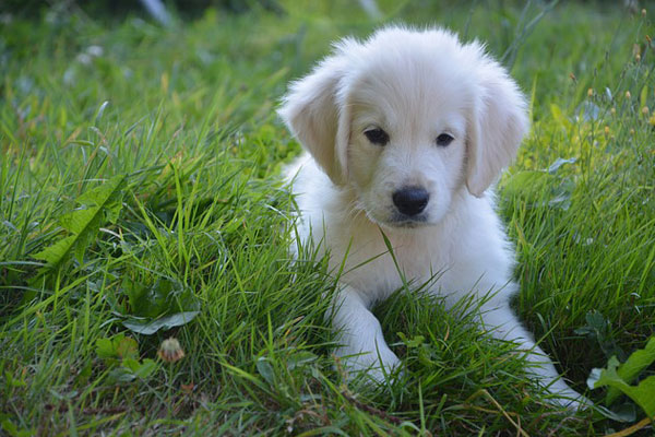 Cute white puppy in the grass