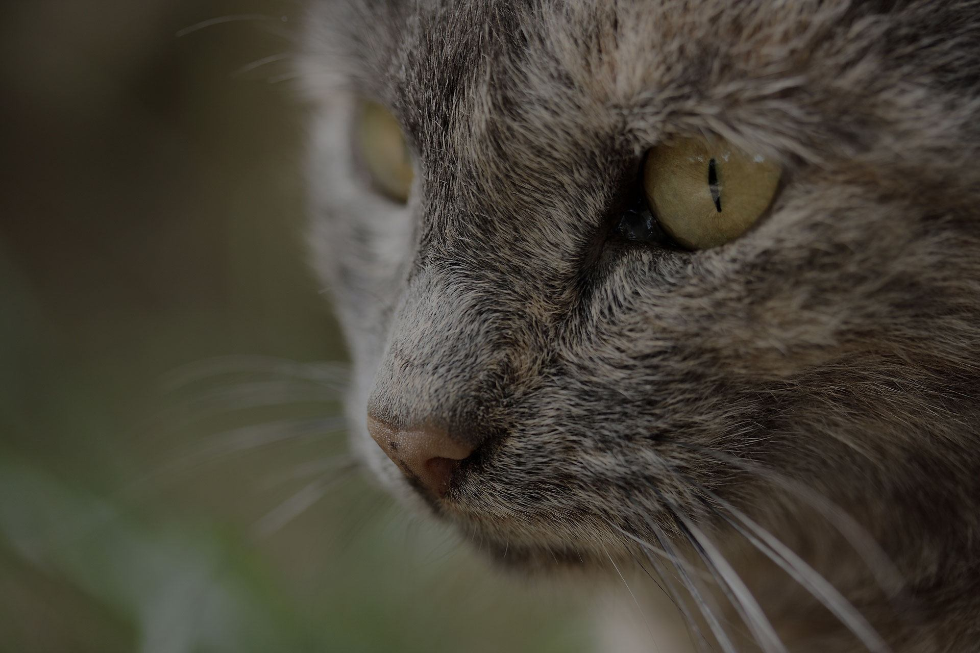 Close-up of cat's face with big green eyes