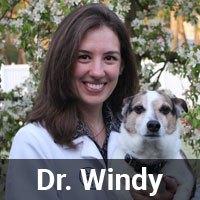 Dr. Windy