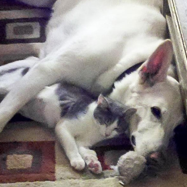 Dog and cat together on carpet