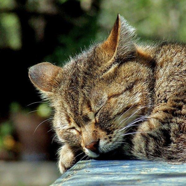 Cat sleeping outside